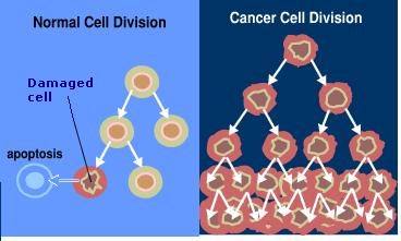 cell division cancer essay 400 words descriptive essay on cancer niharika bhati when cells loose this control, repeated cell division leads to a mass of abnormal cells — called tumor.